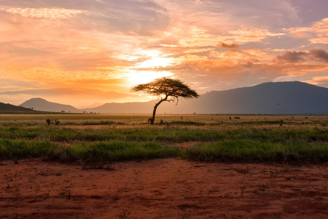 picture of East African landscape